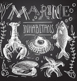 Chalkboard collection of hand drawn sea animals vector image