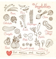 Set drawings of vegetables for design menus vector image vector image