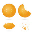 crunchy biscuit crackers in different eating vector image