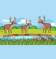 scene with three deers in park vector image