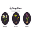 spring flowers set coltsfoot hyacinth narcissus vector image vector image