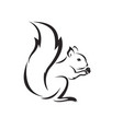 squirrel design on white background vector image vector image
