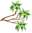wooden branch with green leaves vector image vector image