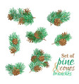 branches of conifers with needles and cones vector image vector image