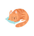 cute red cat animal sleeping on pillow vector image