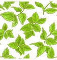 peppermint pattern vector image vector image