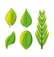 set of natural and ecology icons leaves design vector image