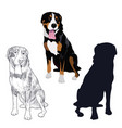 swiss mountain dog in three different styles vector image