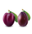 ripe plum with green leaves photo-realistic vector image