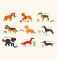 dog breeds working dogs vector image vector image
