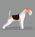 fox terrier vector image