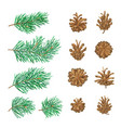 high detailed pine cones and branches with needles vector image vector image