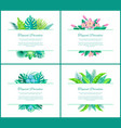 tropical paradise banner with exotic plants leaves vector image