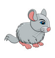 cartoon chinchilla rodent isolated on white vector image