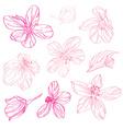 decorative flowers set vector image vector image