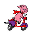 funny pink pig rider on a red fast bike scooter vector image vector image