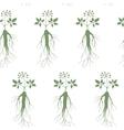 Ginseng seamless pattern vector image
