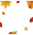 stock autumn falling leaves vector image
