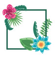tropical flowers leaves frame decoration vector image vector image