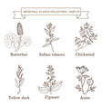vintage collection of medical herb vector image vector image
