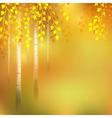 Birch autumn vector image vector image