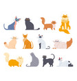 cat breeds cute fluffy cats maine coon bobtail vector image