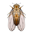 colorful cicada with boho pattern eleme vector image vector image