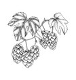 hand drawn black and white hop branch vector image