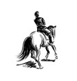 ink sketch rider on horseback vector image