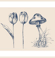 nature design elements mushroom and tulip flowers vector image vector image