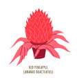 red pineapple tropical flower vector image vector image