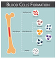 blood cells formation vector image