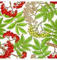 rowan branch pattern vector image