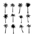 set tropical palms and trees on white background vector image vector image