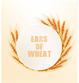 Nature background with ears of wheat vector image