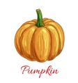 Pumpkin vegetable isolated sketch icon