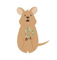 a cute australian quokka animal character design vector image vector image