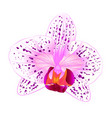 beautiful orchid phalaenopsis purple and white vector image vector image