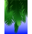coconut fronds vector image