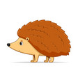 hedgehog standing on a white background vector image