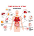 human internal organs infographic poster vector image