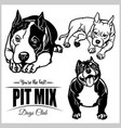 pit mix - set isolated on vector image vector image
