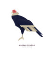 andean condor bird isolated wild zoo animal vector image vector image