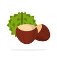 chestnut fruit in green peel and peeled chestnut vector image