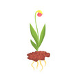 young plant with flower in the ground cartoon vector image