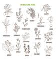best antibacterial herbs vector image vector image