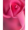 Pink rose macro EPS 10 vector image vector image