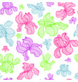 seamless pattern of colour iris flowers vector image