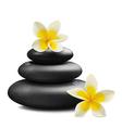 Plumeria flowers and zen stone vector image