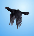 Black raven on blue background vector image vector image